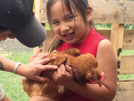 Girl holds a chicken